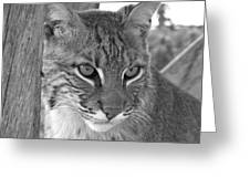 The Hunter Black And White Greeting Card by Jennifer  King