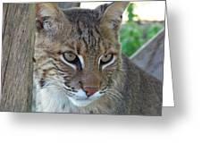 The Hunter Greeting Card by Jennifer  King