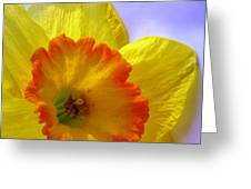 The Joyful Jonquil Greeting Card by Angela Davies