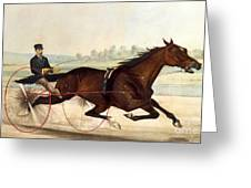 The King Of The Turf Greeting Card by Currier And Ives