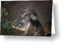 The Koala Greeting Card by Ernie Echols