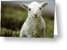 The Lamb Greeting Card by Angel  Tarantella