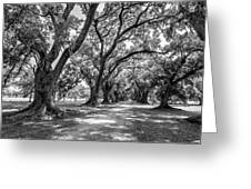 The Lane Bw Greeting Card by Steve Harrington