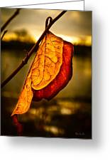 The Leaf Across The River Greeting Card by Bob Orsillo