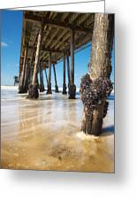 The Life Of A Barnacle Greeting Card by Ryan Manuel