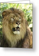 The Lion King Greeting Card by Kim Hojnacki