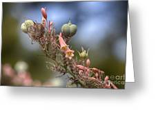 The Little Things In Life Greeting Card by Douglas Barnard