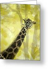 The Long Morning Stretch Greeting Card by Diane Schuster