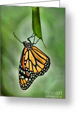 The Monarch Greeting Card by Peggy J Hughes