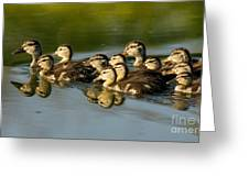 The Morning Rush Greeting Card by Robert Frederick