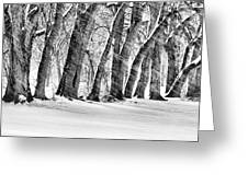 The Noreaster Bw Greeting Card by JC Findley