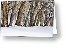 The Noreaster Greeting Card by JC Findley