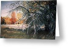 The Old Apple Tree Greeting Card by James Welch