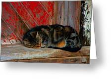 The Old Mill Cat Greeting Card by Julie Dant