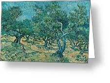 The Olive Grove Greeting Card by Vincent van Gogh