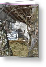 The Paso Fino Stallion At Home Greeting Card by Patricia Keller