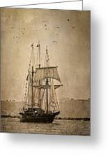 The Peacemaker Greeting Card by Dale Kincaid