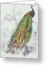 The Peacock Greeting Card by A Fournier