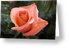 The Perfect Coral Rose Greeting Card by Kurt Van Wagner