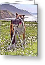The Photographer Greeting Card by Laurel Sherman - Rimrock Reflections