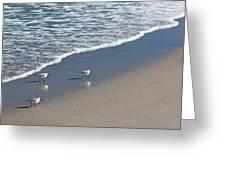 The Pied Sandpiper Greeting Card by Michelle Wiarda