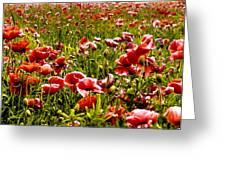 The Poppy Field Greeting Card by Trevor Kersley