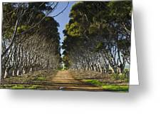 The Road Home Greeting Card by Aaron S Bedell