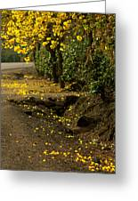 The Road Not Taken Greeting Card by Ramon Fernandez