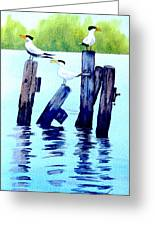 The Royal Terns Greeting Card by Ruth Bodycott
