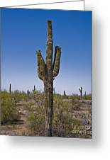 The Saguaro Cactus Ready To Bloom Greeting Card by Kirt Tisdale