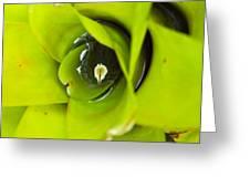 The Secret World in a Bromeliad Greeting Card by Karon Melillo DeVega