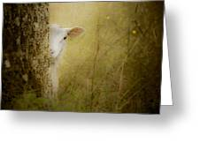 The Shy Lamb Greeting Card by Loriental Photography