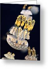 The Spotted Jelly Or Lagoon Jelly Mastigias Papua Greeting Card by Jamie Pham