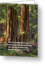 The Strength Of Two - From Ecclesiastes 4.9 And 4.12 - Muir Woods National Monument Greeting Card by Michael Mazaika