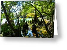 The Swamp By The Springs Greeting Card by Julie Dant