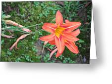 The Tawny Daylily Greeting Card by Sonali Gangane
