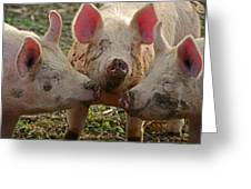 The Three Little Pigs Greeting Card by Steven  Michael