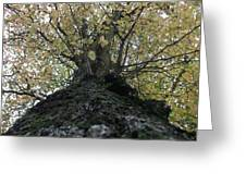 The Tree Greeting Card by Tony Stark