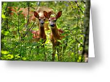 The Twins Greeting Card by Larry Trupp