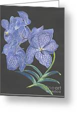 The Vanda Orchid Greeting Card by Carol Wisniewski