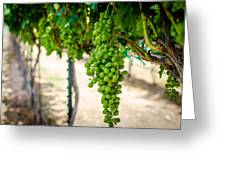 The Vineyard Greeting Card by David Morefield
