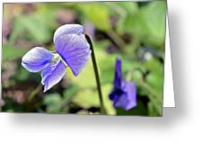 The Violet Greeting Card by Susan Leggett