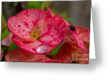 The  Water Drop And The Fly Greeting Card by Hank Taylor