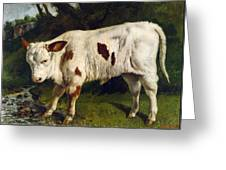 The White Calf Greeting Card by Gustave  Courbet