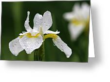 The White Iris Greeting Card by Juergen Roth