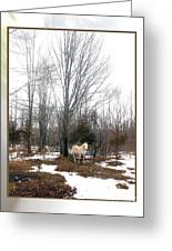 The White Stallion On A Snowless  Mound Greeting Card by Patricia Keller