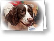 The Wonders Of Christmas Greeting Card by Steve Harrington