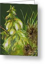 Theres A Yucca In My Yard Greeting Card by Frances Marino
