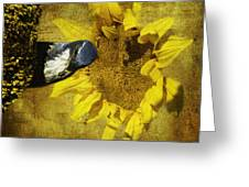 These Sunflower Seeds Are All Mine Greeting Card by Diane Schuster