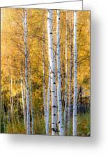 Thin Birches Greeting Card by Ari Salmela